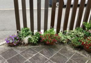 地植えができないエントランスに色々な大きさの鉢植えで高低差をつけて自然な感じに。